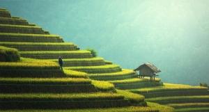 Thailand terraced farm