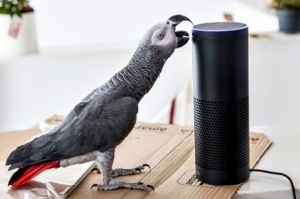 Parrot purchases online
